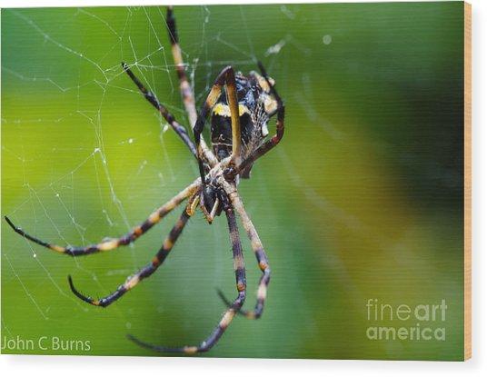 Charlotte's Web Wood Print by John Burns