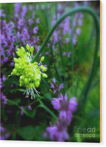 Chartreuse Wood Print by Maria Scarfone