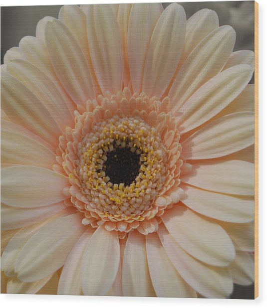 Cheeriest Flower Wood Print by JAMART Photography