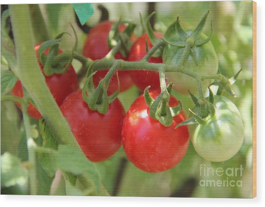 Cheery Tomatoes Wood Print