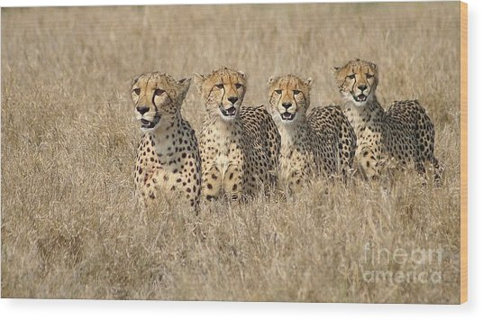 Cheetah Family Wood Print