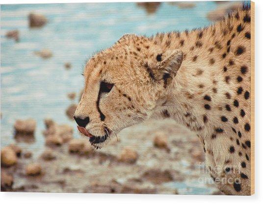 Cheetah Headshot Wood Print by Darcy Michaelchuk