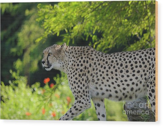 Cheetah Wood Print by Marc Bittan