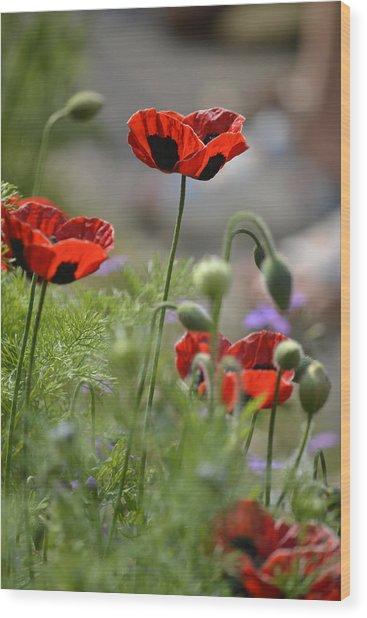 Chelsea Poppies II Wood Print by Dickon Thompson