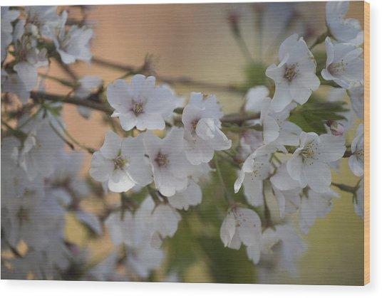 Cherry Blossom 4 Wood Print