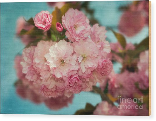 Cherry Blossoms Kanzan Three Wood Print by Susan Isakson