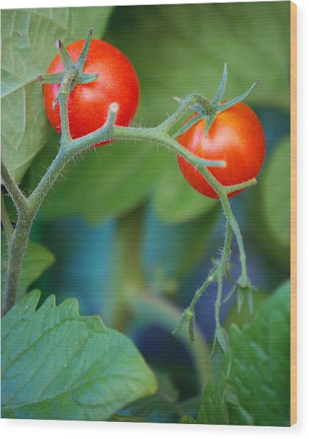 Cherry Wood Print by Miranda Mehrer