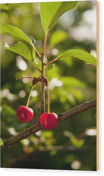 Cherry Wood Print by Sasha Gurkova