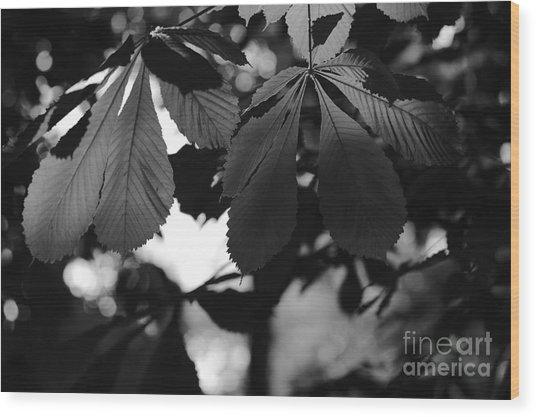 Chestnut Leaves Wood Print