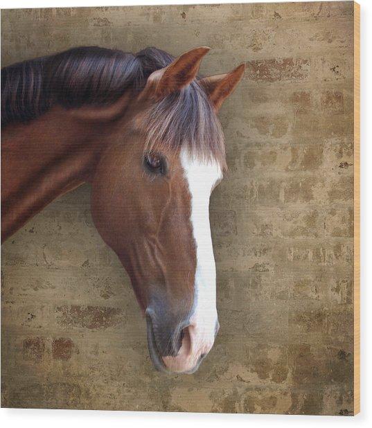 Chestnut Pony Portrait Wood Print