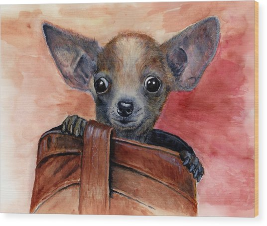 Chihuahua Puppy Wood Print by Katerina A Cechova