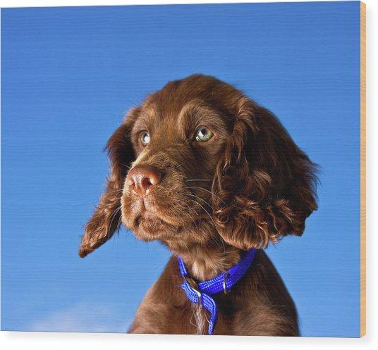 Chocolate Brown Cocker Spaniel Puppy Wood Print