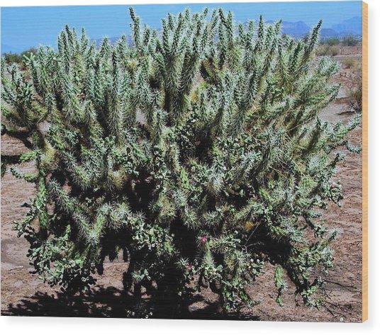 Cholla Cactus Wood Print by David Killian