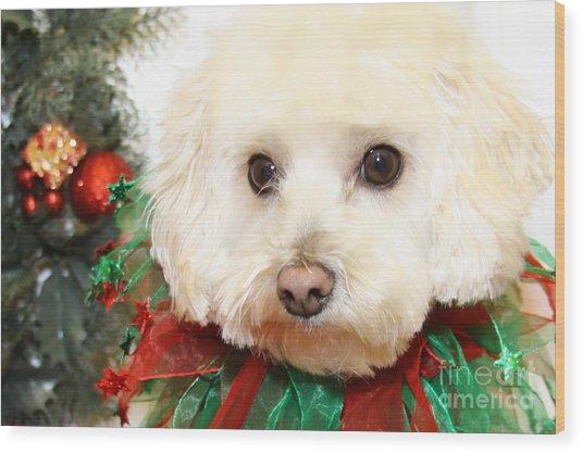 Christmas Portraits - Maltipoo Wood Print by Renae Crevalle