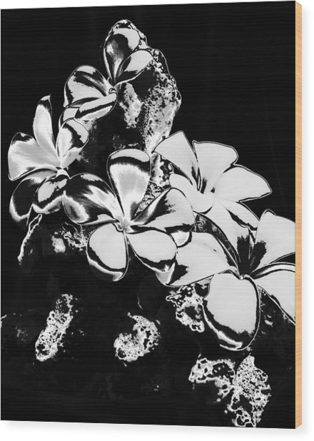 Chrome Plumeria Wood Print by Elizabeth  Doran