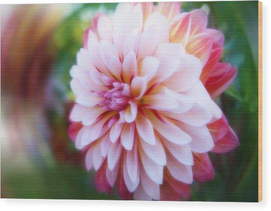 Chrysanthemum Revelation Wood Print