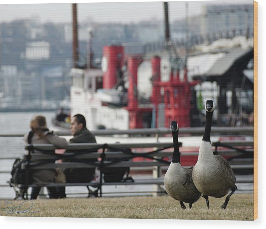 City Geese Wood Print