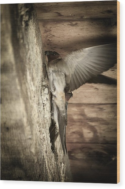 Cliff Swallows 2 Wood Print by Scott Hovind