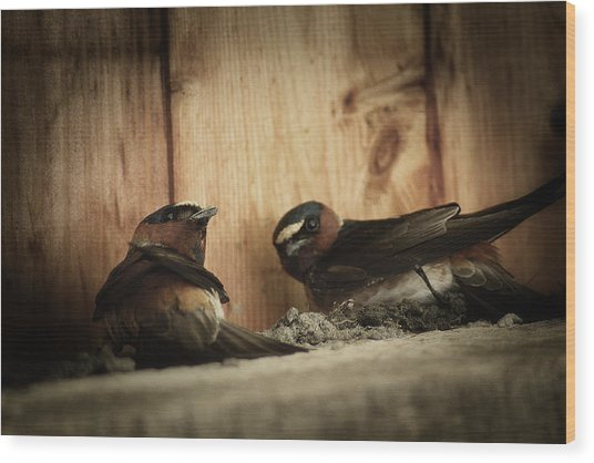 Cliff Swallows 3 Wood Print