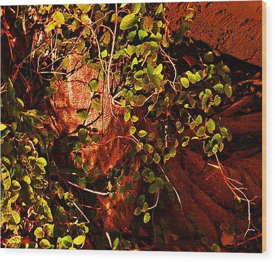Climbing Magic Plant Wood Print by Susana Sanchez Giraud