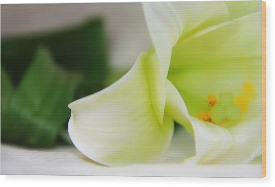 Close-up On White Lilies Wood Print by Gal Ashkenazi