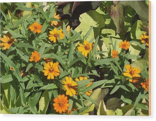 Close Up Yellow Daisies Wood Print