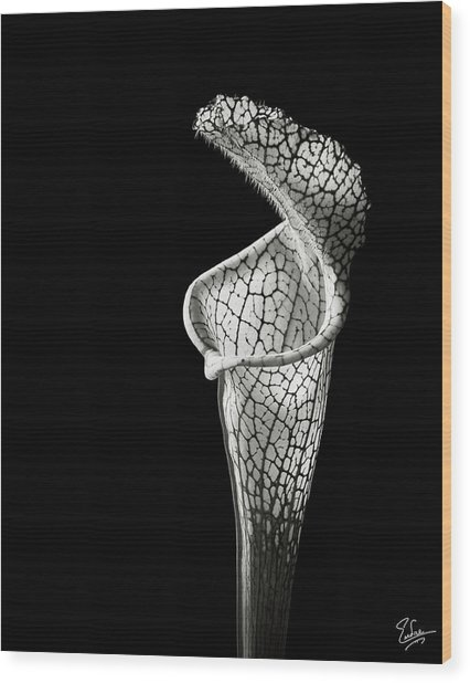 Cobra Lily In Black And White Wood Print