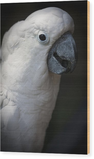 Cockatoo Wood Print