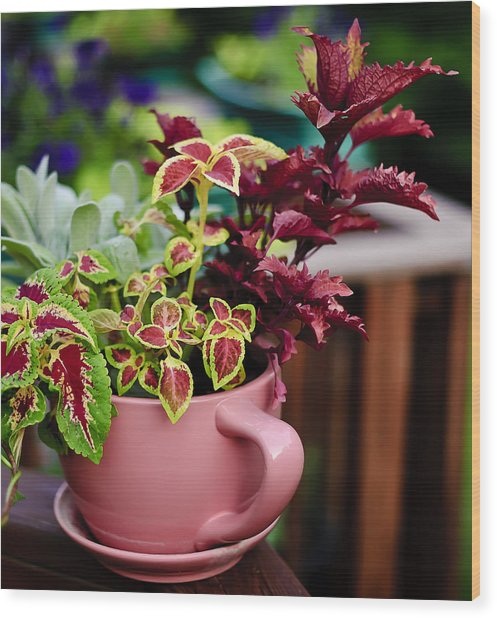 Coleus Collection Wood Print by Michael Putnam