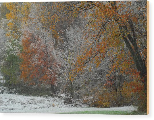 Color Caught In The Snow Wood Print
