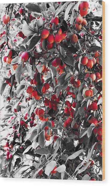 Color Of Apples Wood Print by Matt Lewis