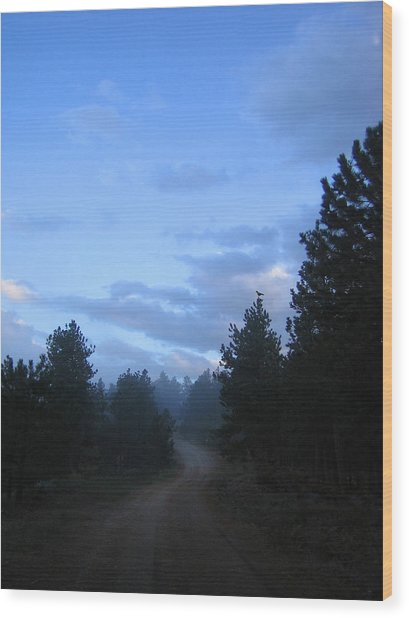 Colorado Pine Forest In Mist Wood Print by Ric Soulen