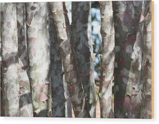 Colorful Bark Wood Print