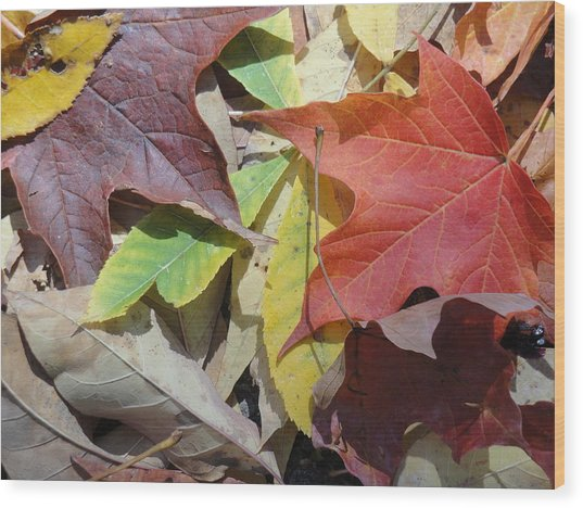 Colorful Fall Leaves Wood Print by Kathy Lyon-Smith
