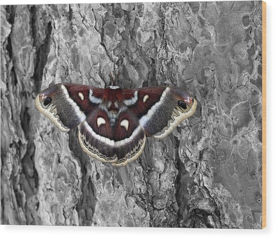 Colorful Moth Wood Print