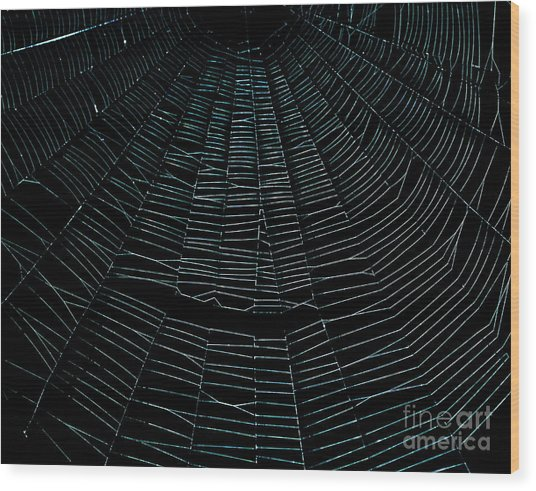 Come Into My Web Wood Print by Monica Poole