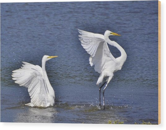 Common Egrets Wood Print