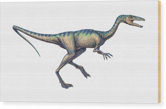 Compsognathus Dinosaur, Computer Artwork Wood Print by Joe Tucciarone