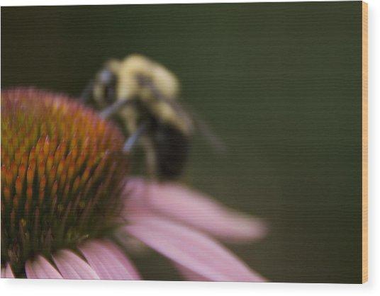 Cone Flower Studies 2012 - 5 Wood Print