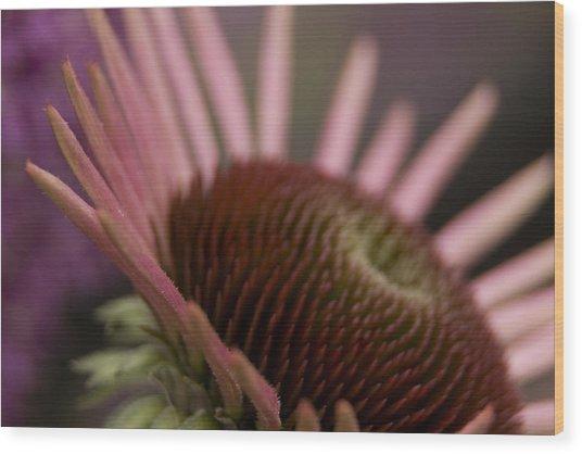 Cone Flower Studies 2012 Wood Print