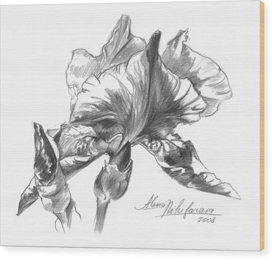 Conte Pencil Sketch Of Iris Wood Print