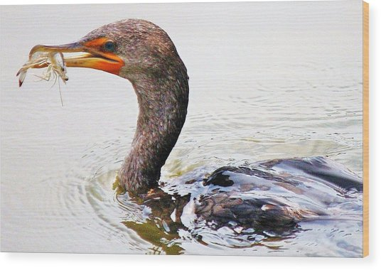 Cormorant Catching A Shrimp Wood Print by Paulette Thomas