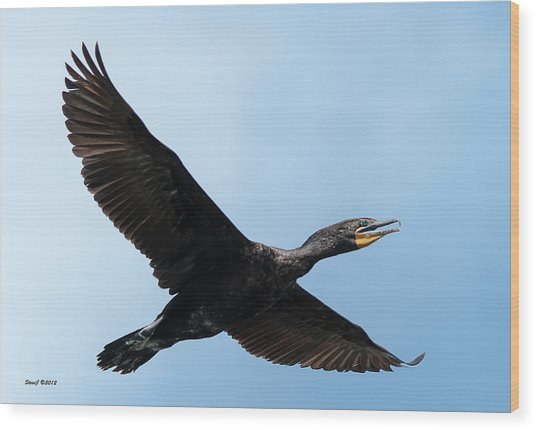 Cormorant Flying Over Duck Lake Wood Print