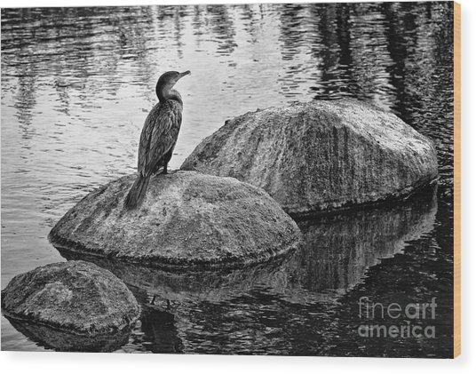 Cormorant On Rocks Wood Print