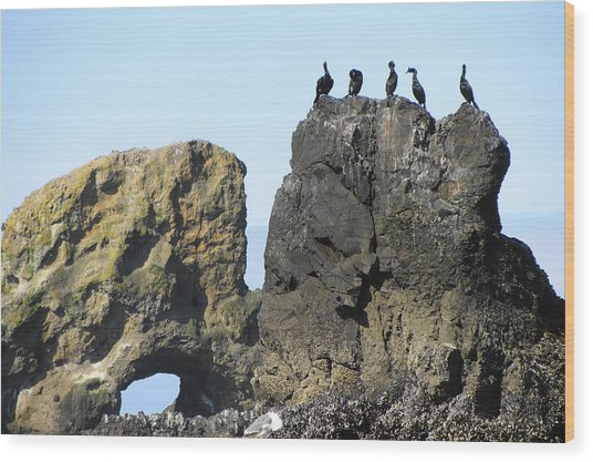 Cormorants At Indian Point Wood Print