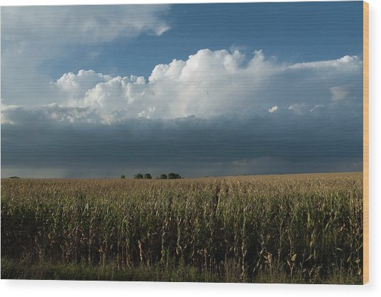 Corn Country Wood Print