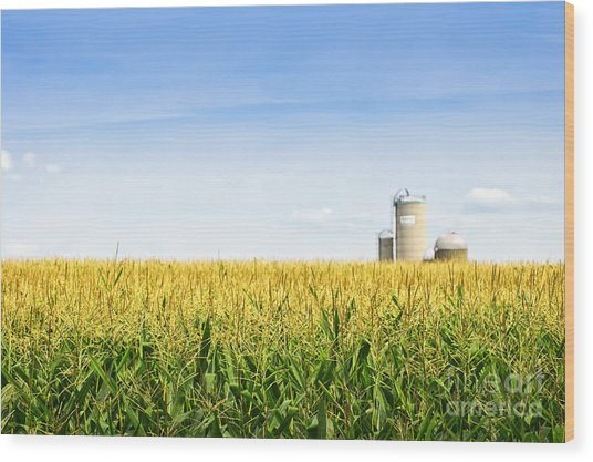 Corn Field With Silos Wood Print