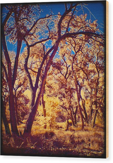 Cottonwoods Wood Print
