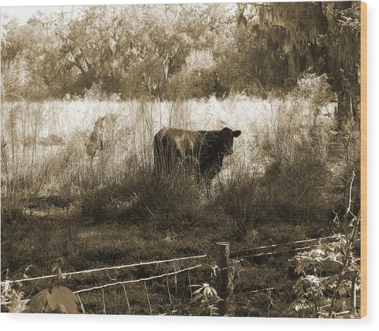 Cows In Pasture Wood Print by Pamela Stanford