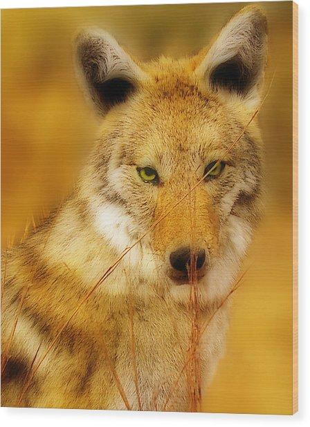 Coyote Pretty Wood Print